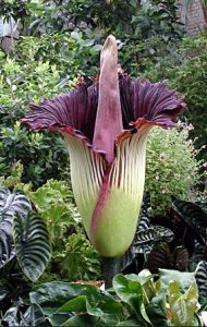 bungabangkai-faunadanflora