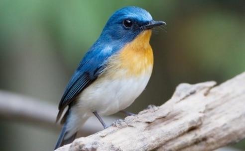 61 Gambar Binatang Peliharaan Burung Gratis Terbaik