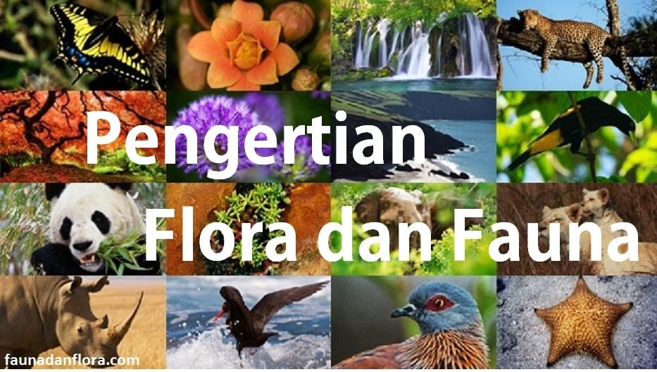 faunadanflora