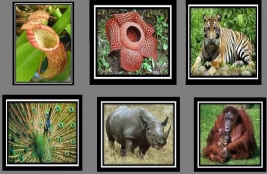 flora fauna langka