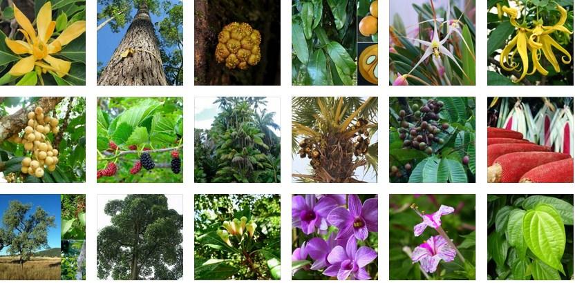 40 Gambar Flora Endemik Indonesia Gratis Terbaik
