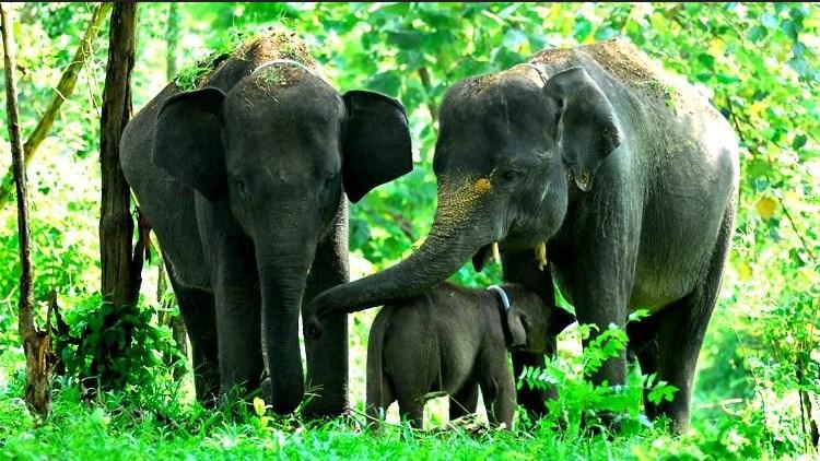 gajahsumatra-faunadanflora