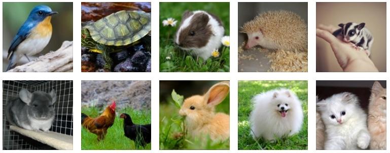50+ Gambar Hewan Ternak Dan Peliharaan Terbaru