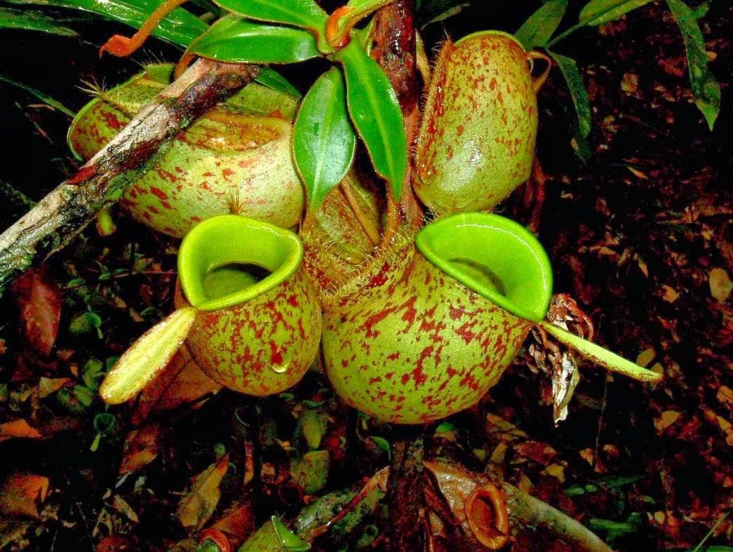 7400 Koleksi Gambar Flora Peralihan Beserta Penjelasannya Gratis Terbaru