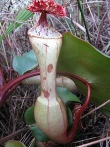 kantongsemar-faunadanflora