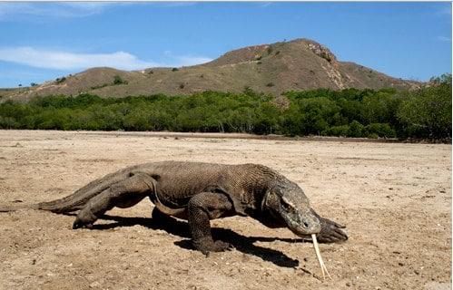 44 Gambar Hewan Flora Dan Fauna HD