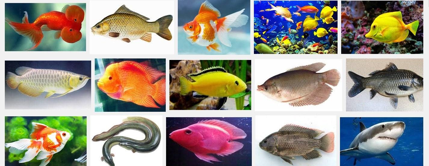 macam macam ikan