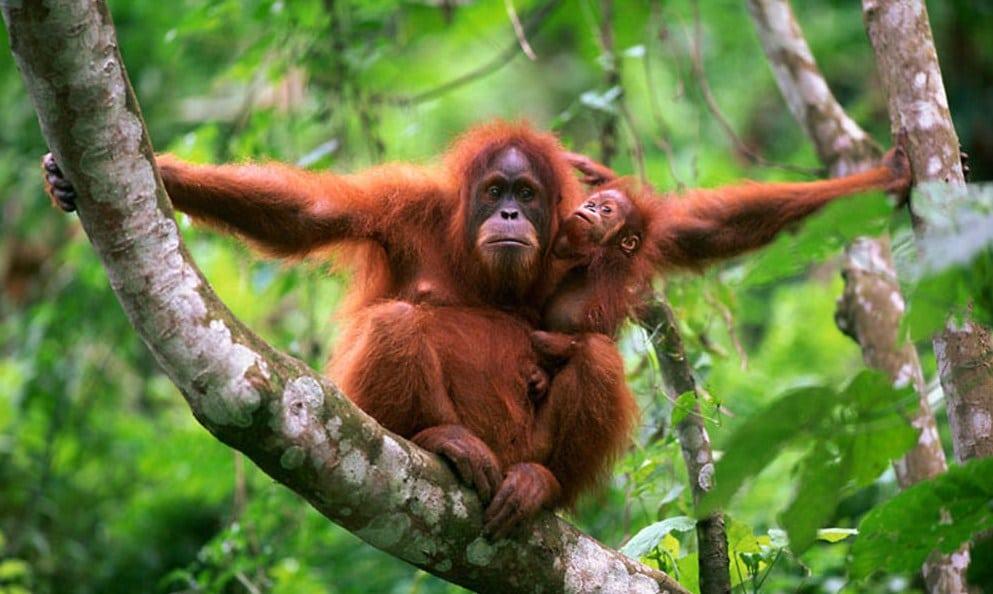10 Fauna Dan Flora Terlangka Di Indonesia Faunadanflora Com