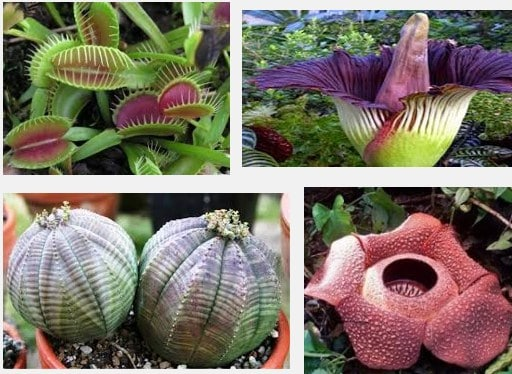 12 Tumbuhan Unik, Aneh dan Terlangka di Dunia - Flora dan ...