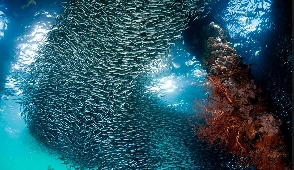 baawah laut wakatobi