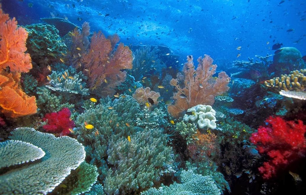 bawa laut raja ampat