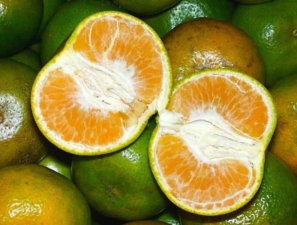 jeruk siam
