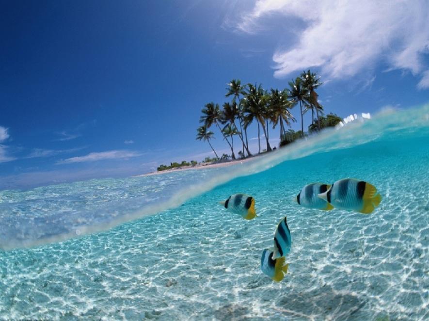spot diving taman bunaken
