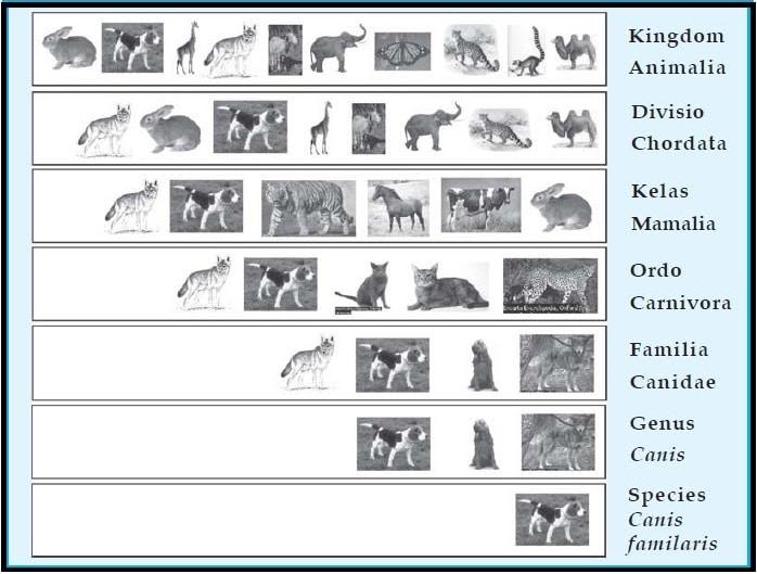 tingkatan klasifikasi makhluk dihup