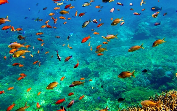 tulamben spot diving