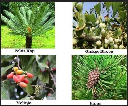 tumbuhan berbiji