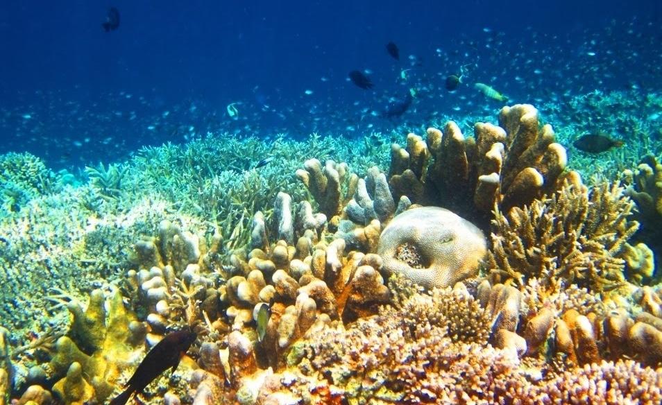 under water pulau derawan