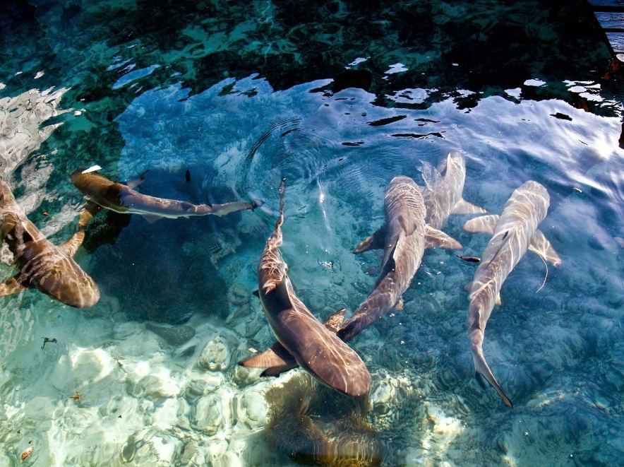 wisata pulau karimun jawa