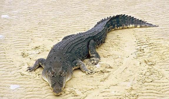 660+ Gambar Hewan Vertebrata Reptilia Gratis