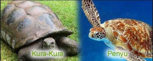 kura-kura dan penyu