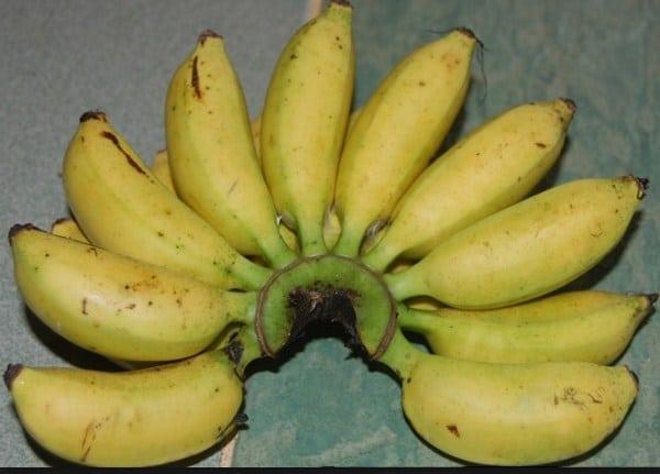 pisang susu