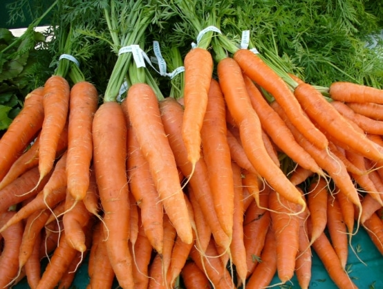 umbi wortel