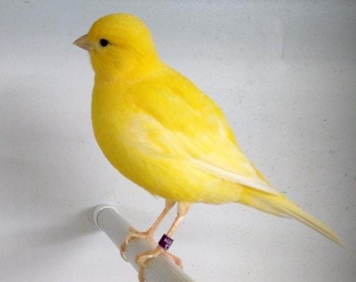 9100 Gambar Hewan Aves Dan Penjelasannya Gratis Terbaru