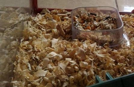 Serbuk kayu dalam kandang hamster