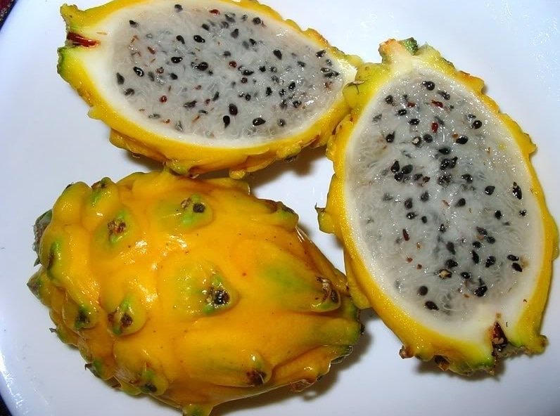 http://www.faunadanflora.com/wp-content/uploads/2016/08/buah-naga-kuning.jpg