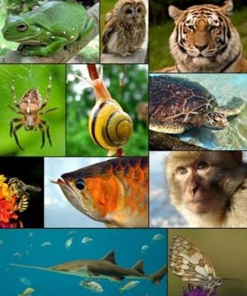 93 Kelompok Hewan Avertebrata Beserta Gambar Gratis Terbaru