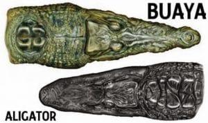 perbedaan moncong buaya dan alligator
