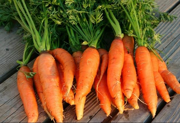 wortel Nantes