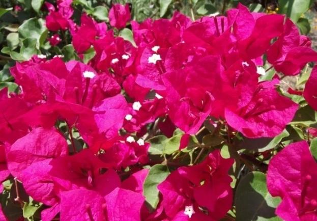 bunga-kertas-barbara-karst