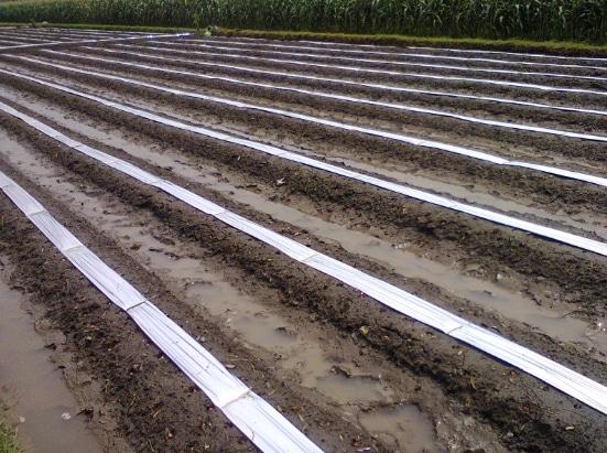 bedengan-untuk-menanam-budidaya-bawang-merah