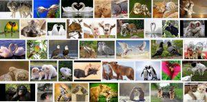 Romantic Animals