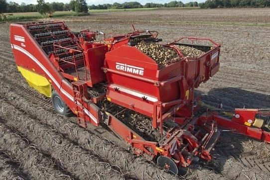 penanam-kentang