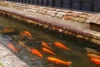 Cara Budidaya Ikan dalam Parit
