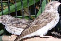86+  Gambar Burung Mantenan HD Terbaru Gratis