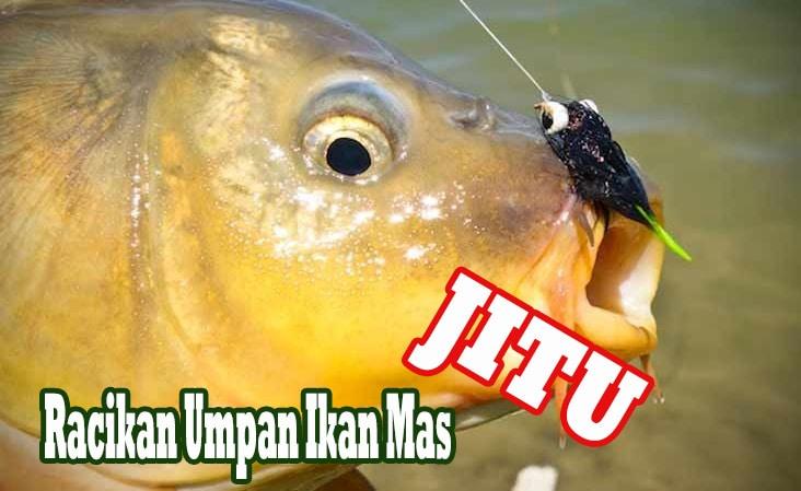 13 Rahasia Racikan Umpan Ikan Mas Paling Jitu Mudah Faunadanflora Com